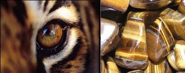 схожесть тигрового глаза с тигром