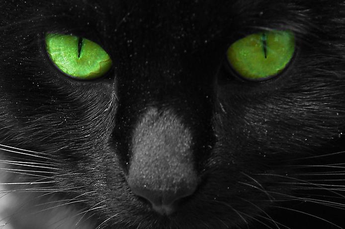 Кому подходит кошачий глаз по знакам зодиака